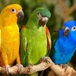 Απαραίτητη η  τροφή για τα παπαγαλάκια